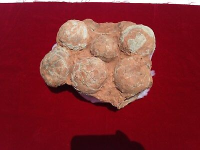 Dinosaur Eggs / Six Egg Nest