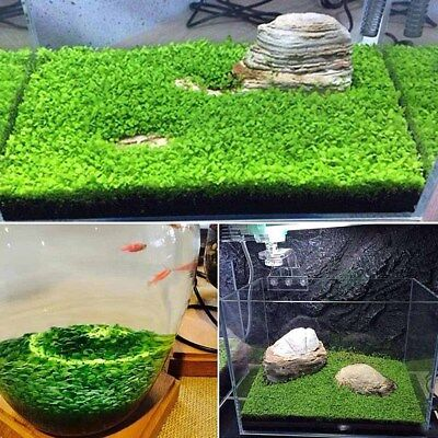 Plant Seeds Fish Tank Aquarium Aquatic Water Grass Decor Home Foreground Plants