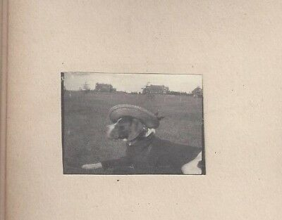 ANTIQUE PHOTO ALBUM 1890s Dog Dress Up BEACH yacht SS PETREL BASKETBALL cats