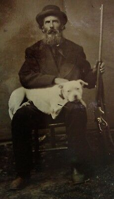 Antique Tintype Photo Bearded Hunter With His Shotgun & Beautiful Pit Bull Dog