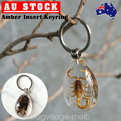 Amber Real Scorpion Cicada Insect Key Ring Chain Car Keyring Keychain Holder AU