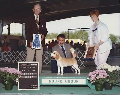 Beagle Show Photo CH HEWLEY EASTERN Group 1, Janesville Beloit KC 1988, 1 of 2