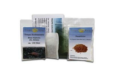 Triops Beni Kabuto ebi Albino Tadpole Shrimp Starter Kit Plus - feed + eggs