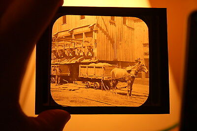 Glass Plate Slide Kohinoor Colliery, Shenandoah, PA  Mule with Mining Car 1880's