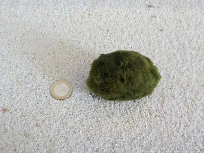 Aquarium Plante Boule de Mousse XL 8-11cm Plante D'Aquarium Algue Nettoyage