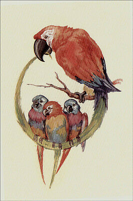 Vintage Bird Parrot  w/ Babies CUTE ~ New  Large Note Cards