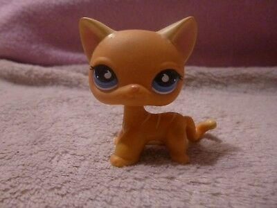 Petshop lps pet shop chat europeen rare orange tigr yeux bleus eur 12 00 picclick fr - Petshop tigre ...