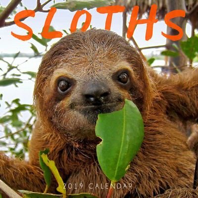 Sloths 2019 Wall Calendar by Paper Pocket, Free Post