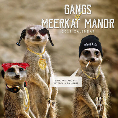 Gangs of Meerkats 2019 Wall Calendar by Paper Pocket, Free Post