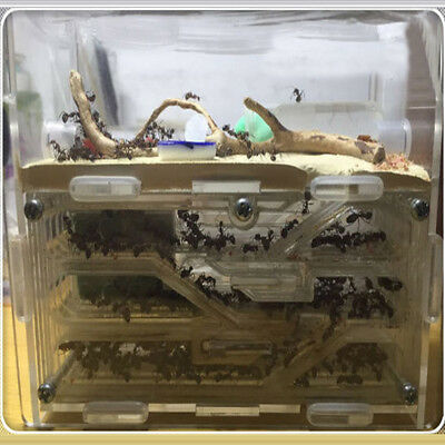 Ant Home Farm Science Natural Ecological Educational Insects Live World Toy Gift