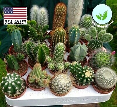 25+ Seeds MIX cactus succulent  EXOTIC living stones desert rock USA SELLER!