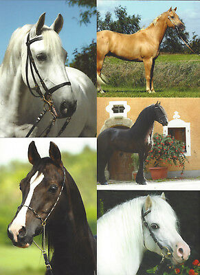 Lot Of 15 Horse Postcards Irene Hohe 2007 Different Breeds Most Are Named 1