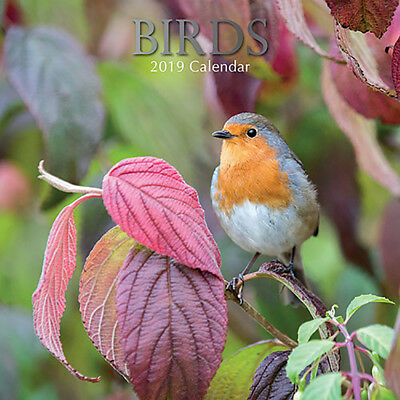 Birds 2019 Wall Calendar (Gifted Stationery) Free Postage