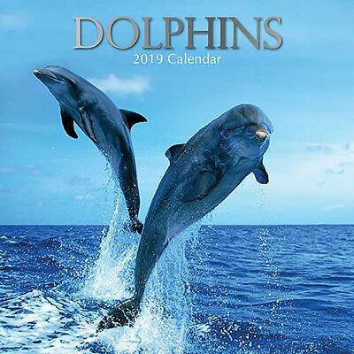 Dolphins 2019 Wall Calendar (Gifted Stationery) Free Postage