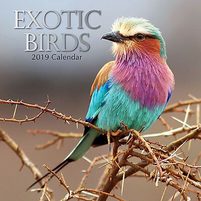 Exotic Birds 2019 Wall Calendar (Gifted Stationery) Free Postage