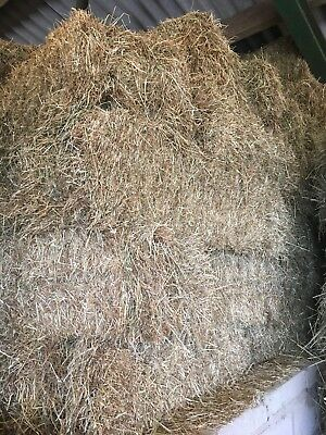 Quality Meadow Hay - Small Bales
