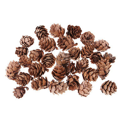 30x Mini Natural Pine Cones Dried Flowers for Retro Photo Shooting Props