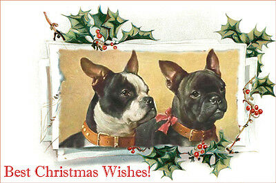 Boston Terrier & French Bulldog by C Reichet LARGE New Christmas Note Cards