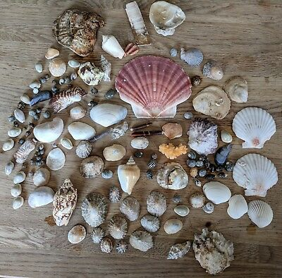 Mixed sea shells as per photo.