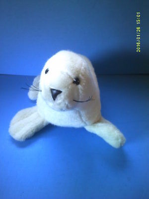 White Plush Seal Marine Wildlife
