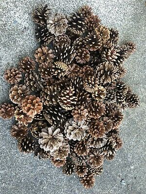 Christmas Pine Cones (small)