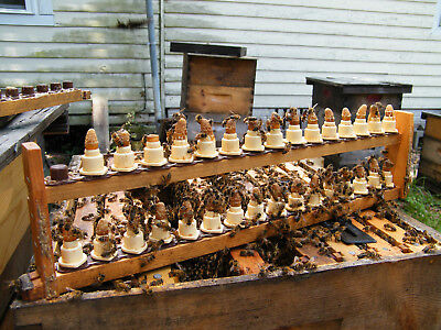 Mated Queen Bee, Varroa Killers, Vsh Hygienic, Survivor Stock, Unmarked
