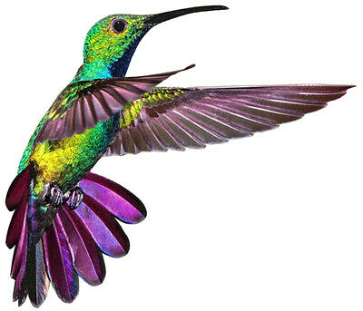 Colorful HUMMINGBIRD In Flight hovering  - WindoCling  Sun Catcher StickOn Decal