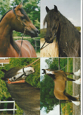 Lot Of 14 Horse Postcards Irene Hohe 2001 Different Breeds Most Are Named 2