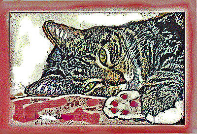 Get Well Kitty Greeting Card    Personal Greetings Available