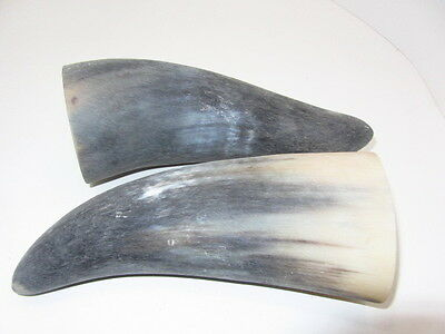 2 Cow horns....V2B61......raw and unfinished cow horns......