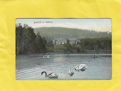 BOWHILL  SWANS     NEAR   SELKIRK  ( o13 )