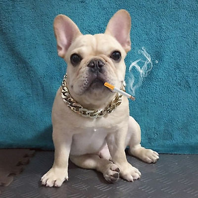 Pet Puppy Dog Chain Collar Punk Gold Plated Cat Safety Collar Adjustable