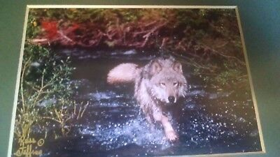 Wolf Photo  By Renowned Wildlife Photographer Ross Jeffrie's