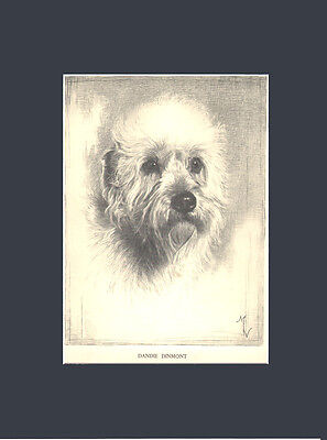 RARE  Dandie Dinmont Terrier Dog Drawing Print 1935 by Malcolm Nicholson 10X13