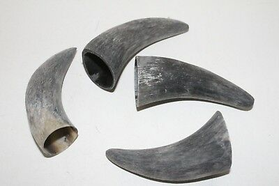 4 Cow horn tips ....  04e80 ... Raw, unfinished cow horns.,.....