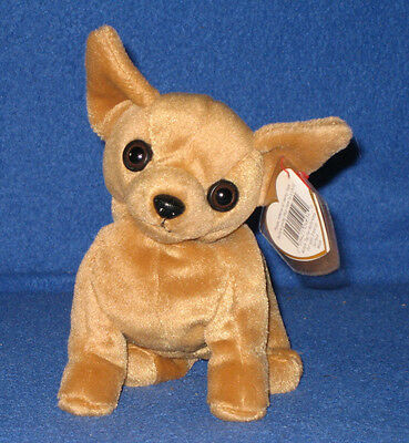 TY TINY the CHIHUAHUA BEANIE BABY - NEW - MINT with MINT TAGS