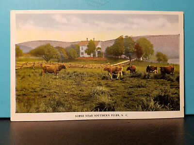 Vintage Divided Postcard PC Farm Cows Field Southern Pines NC