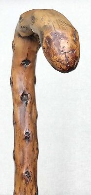 Vintage Antique 1800' Fat Irish Blackthorn Shillelagh Walking Stick Cane Old