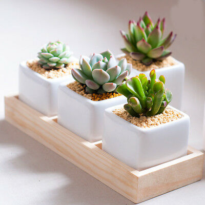 3Grids Small Square Flower Plant Pot With Bamboo Tray And Little Plants