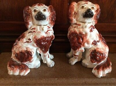 High Quality Pair of Genuine Antique Staffordshire Dogs/ Spaniels 18cm Tall