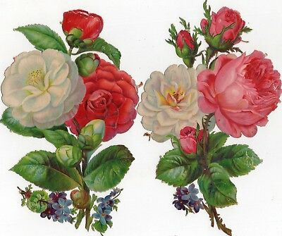 1800's Victorian - Mixed Pink White Rose / Carnation - Diecut Lot