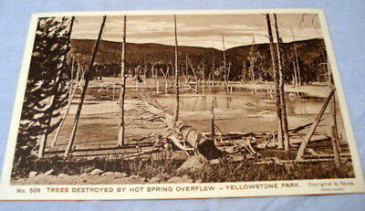 Antique Postcard Yellowstone Park Haynes Photo #506 Trees Destroyed Hot Springs