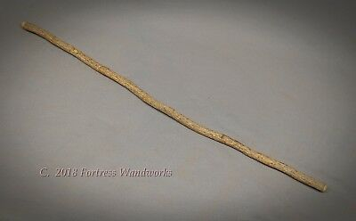 Wood Magic Wand of Holly Natural Branch Metaphysical Wizard Witch Ritual Pagan