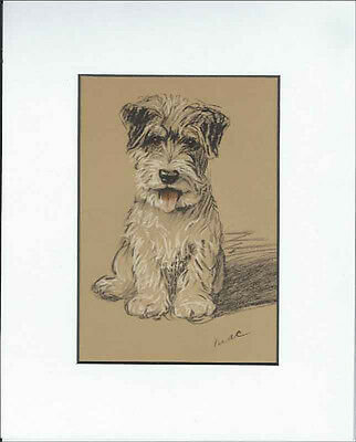 Sealyham Terrier Dog Puppy Setting  Print 1937 by Lucy Dawson 8 X 10 WHITE MAT