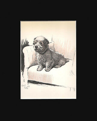 Gorgeous Sealyham Terrier Dog by Cecil Aldin 1930 Lithograph Print 9x12 Mat