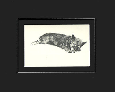 """Cairn Terrier Dog Print 1939 by Cecil Aldin 8X10"""" Matted Cute Puppy Sketch"""