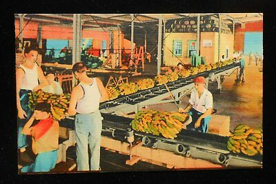 1940s Unloading Bananas from Ship Side New Orleans LA Orleans Co Postcard