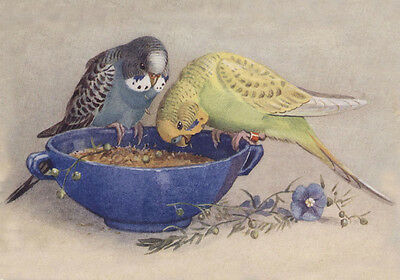 Vintage Bird Parakeets Budgies Having a Feast ~ 8 New  Large Note Cards