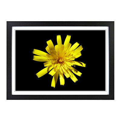 Framed Picture Print A2 Flower Macro Yellow Floral Botanical Wall Art Horizontal