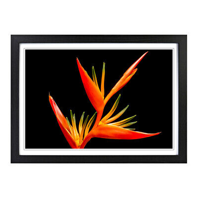 Flower Bird of Paradise Floral Botanical Wall Art Framed Picture Print Size A2